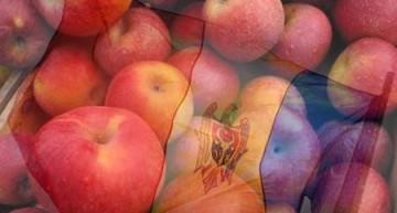 Export de 82 de tone de mere din Republica Moldova, distruse de autoritățile ruse