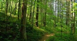 5% din afacerile locale ale Holzindustrie Schweighofer vor fi afectate de retragerea certificarii FSC (The Forest Stewardship Council)