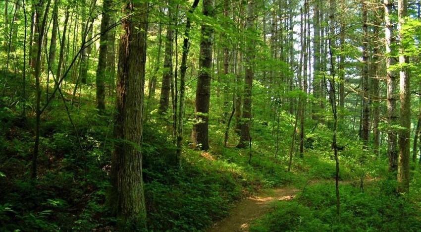 Schweighofer și o sinteză neagră despre Pădurile României în presa română