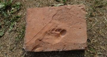 Sarmisegetuza! Urma piciorului unui copil pe o cărămidă veche de aproximativ 1.800 de ani ! Descoperire arheologică de excepție în situl Coloniei Sarmizegetusa Ulpia Traiana!