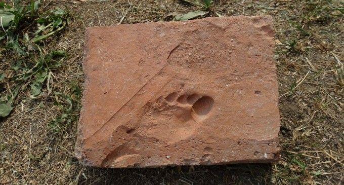 Sarmisegetuza - cărămidă veche de aproximativ 1.800 de ani purtând urma piciorului unui copil (foto: Carmen Ciongradi - voceatransilvaniei.ro