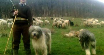 De ce atâta furie la păstorii români? Povești macabre cu vânători care au ucis căinii ciobanilor